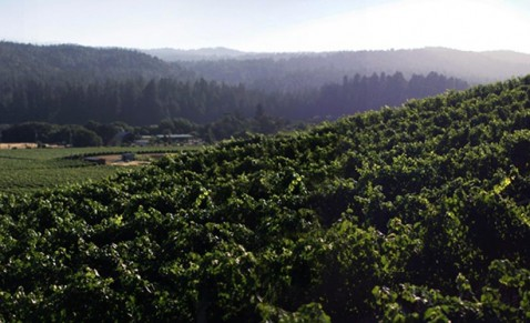 Savoy Estate Vineyard - Learn More